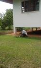 Grandad chopping fresh coconut