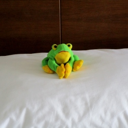 Respectful froggy
